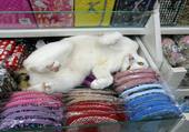 le chat du magasin