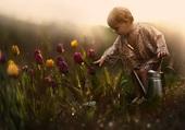 l'enfant aux tulipes