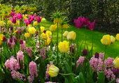 Jardin keukenhof Hollande