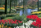 fleurs printaniere