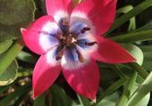 fleur du jardin rouge