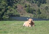 Transhumance ( Ariège )