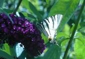 Puzzle papillon sur fleur