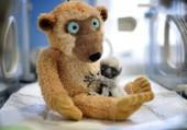 Puzzle bébé lémurien