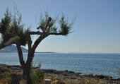Cote de Vaï en Crète