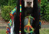 chien hippi