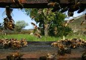 Puzzle Le monde fascinant des abeilles
