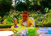 camélia au jardin