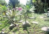 Jardin à Manau