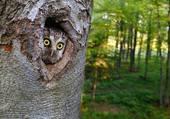 les yeux de l'arbre