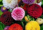 gerbe de fleur