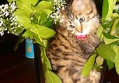 Puzzle BALI dans mes fleurs
