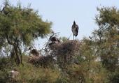 Puzzle Camargue nids de cigognes
