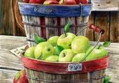 Cueillette des pommes