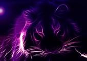 tigre swagy
