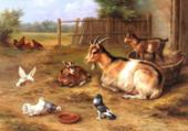 chèvres à la basse-cour