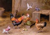 Puzzle jolies poules