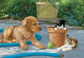 chien et chats