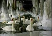 cygnes stalactites