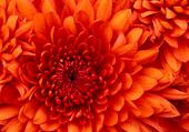 la belle fleur