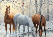 chevaux en hiver