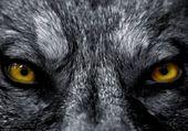 les yeux d or