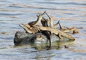 Puzzle crocodilles