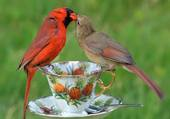 Puzzle 2 oiseaux amoureux