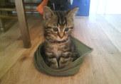 Bébé chat et sa casquette