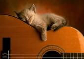 Chat qui dore sur une guitare