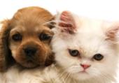 Chiot et chaton mignons
