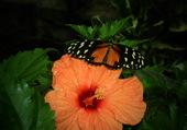 papillon sur jolie fleur