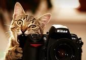 chaton!