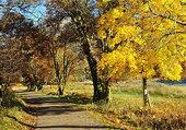 Arbres  jaune d'automne