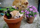 chat pot
