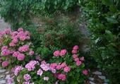 Fleurs et vigne