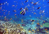 Le merveilleux monde marin