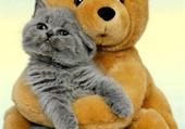 Nounours et chat