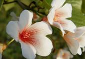 Fleurs banches coeur orangé