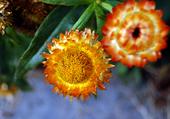 Fleurs Maizerets