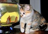 1 chaton & 1 poisson