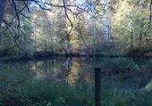 Etang dans la forêt