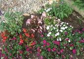 Pareterre de fleurs