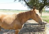 Le cheval d'Isabelle