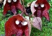 Orchidées masque D-V-