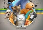 Puzzle meli melo d animaux