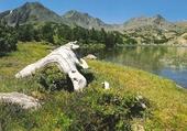 Dans les Pyrénées