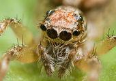 Puzzle l'araignée
