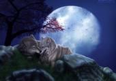 tendresse au clair de lune
