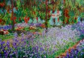 Allée Iris bleus